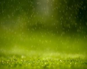 rain-wallpaper-grass