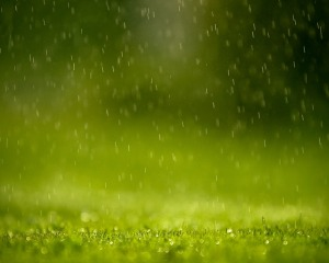 rain-wallpaper-grass