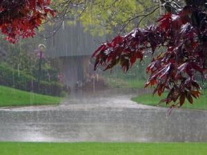 Rain_Beautiful_Wallpapers_Pics1