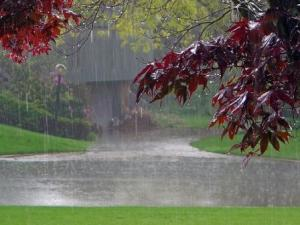 Rain_Beautiful_Wallpapers_Pics1